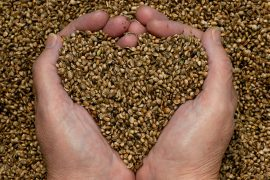 thyme-for-hemp-seeds-hands1
